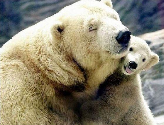 Polarbjørn