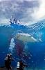 Dykking: Hai - Undervannsfotografering