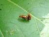 Forelskede insekter