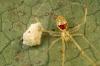 En glad edderkopp