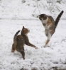 Katter som danser