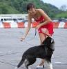 En hund som spiser en kjole