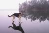 Hund som går på vannet