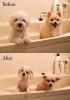 Våte hunder før og etter