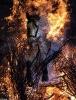 Hest i brann