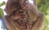 Et dyr i et tre