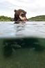 Bjørn som spiser fisk