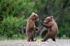 Kung fu bjørner