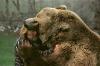 Stor bjørn som spiser på hodet til en mann