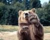 Bjørn som sier hei