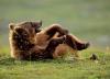 Bjørn med latteranfall
