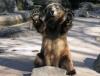 Bjørn som vinker