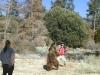 Bjørn og turist i slosskamp