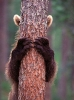 Bjørn som gjemmer seg