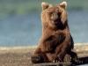 Sittende bjørn som hilser