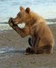 Bjørn som visker