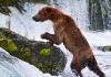 Bjørn ved fossen