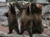 Bjørner som hilser