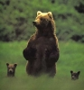 Bjørnemor med barn som sjekker området