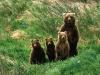 Bjørnemor og barn som poserer