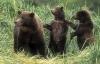 Bjørnemor med barn