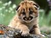 Søt kattepus