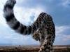 Gepard rompehull