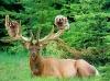 Hjort som tilbyr gratis skyss