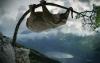 Elefant som klatrer i et tre