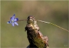 Lizard carrying a flower