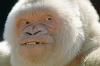 Monkey granny