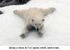Polar bear sledging