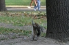 Squirrel playing Tarzan