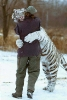 White tiger hug