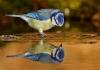 Fugl refleksjon
