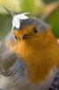 Fugl med blomsterhatt