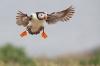 Fulg i spesiell flight