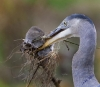 Stor fugl som spiser