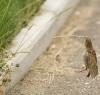 Fugl som henger fra et strå