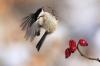 Fugl som prøver å lande