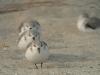 Fugler på stranden