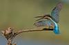 Fugler som krangler om plassen