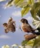 Fugler som blir sparket ut