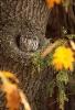 Camo-ugle i et tre