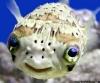 Glad fisk