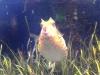 Overrasket fisk