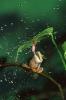 Frosk med paraply