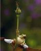 Frosk og en blomst