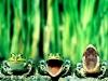 Frosker i kø
