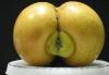 Eplerumpe